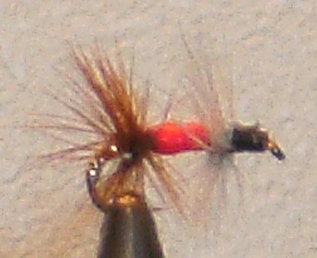 Red Renegade Trout Fly
